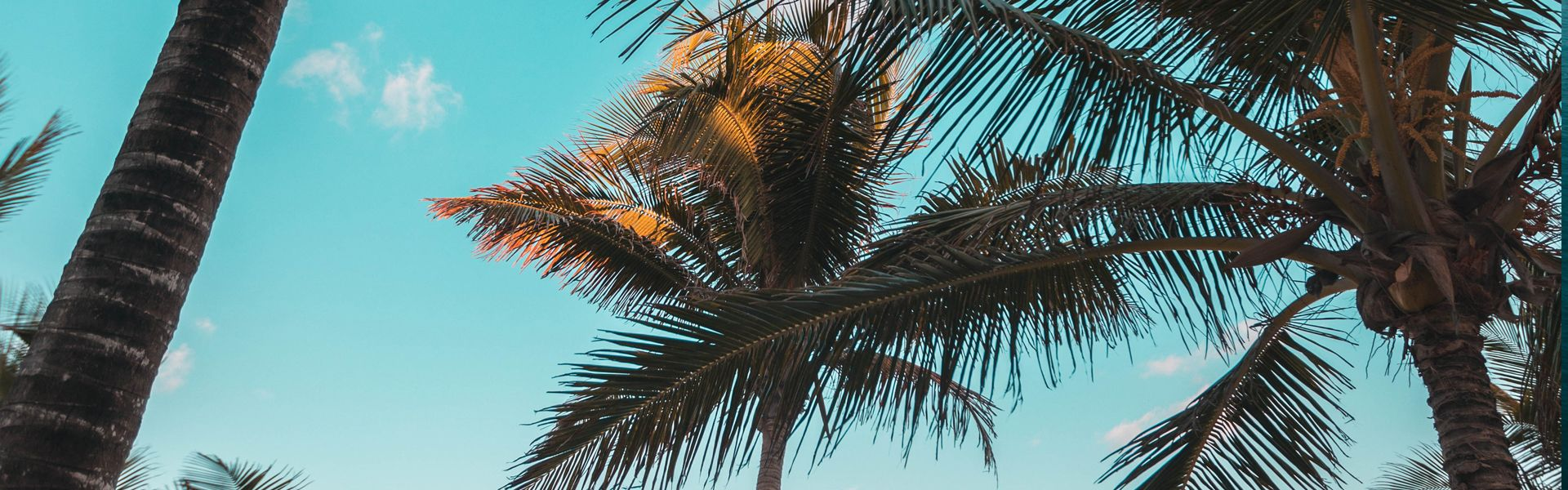 Palm Trees Background Image